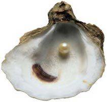 oyster_shell.jpg