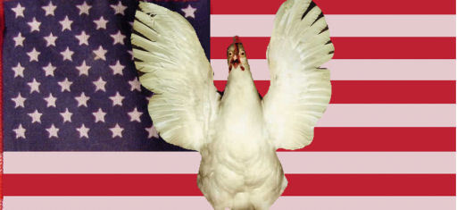 stars_stripes_fowl.jpg