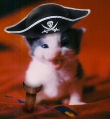 pirate_cat.jpg