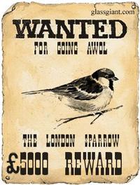 Missing_sparrow.jpg