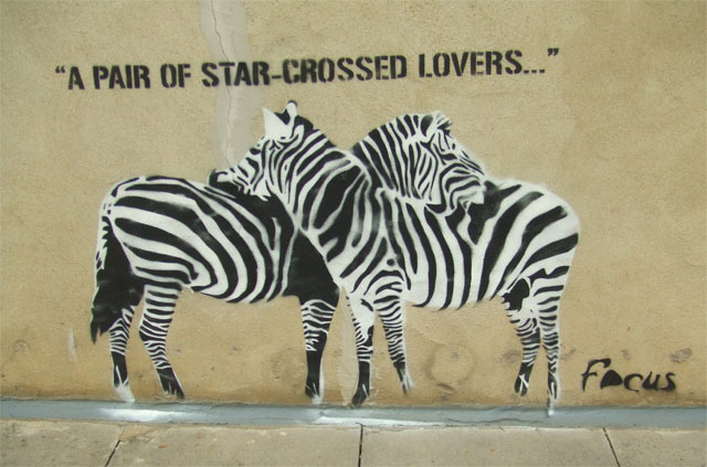zebrasinlove.jpg