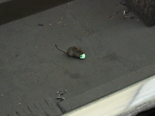 MouseMayhemHospital.jpg