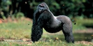 Primate Roundup