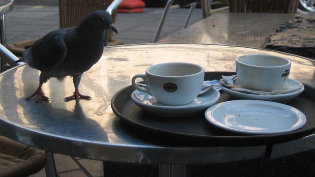 pigeontable.jpg
