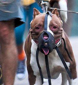 DoggyDoubts.jpg