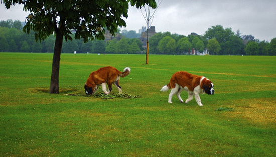dogsinpark.jpg