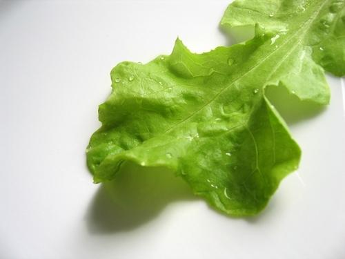 lettuce500.jpg