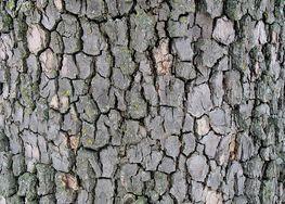 Tuesday Tree Trauma