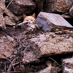 1406_cat.jpg