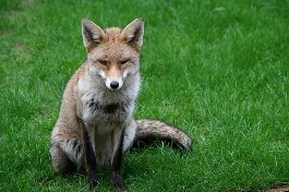 Entirely Outfoxed