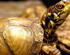 Three Legged Tortoise Stolen