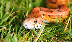 Escapee Snake No Match For London Police