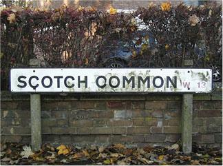 scotchcommon.jpg
