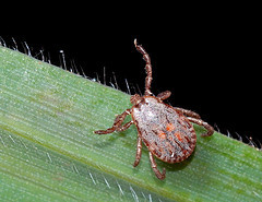 Tick Warning Requested For Richmond Park