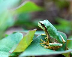 3110.frog.jpg
