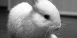 Bunnies Burn But Nice Neighbours Ameliorate Anguish