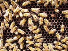 2111_beehive.jpg