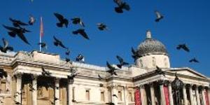 Pigeon Vigil In Trafalgar Square