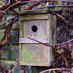 Cockney Sparrows Set Up Home