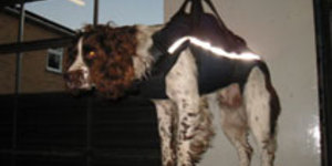 Doggy Duty To Enhance Fire Brigade Search And Rescue