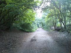 0702.walk.jpg