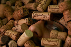 corks_nose.jpg