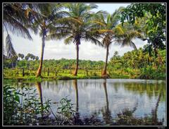 Kerala Dreamin'