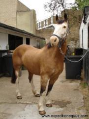Equine Trek From London To Turkey