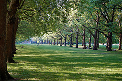 Should London Have Grade Listed Trees?