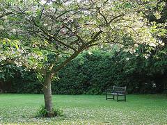 1607.garden.jpg