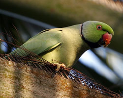 These Parakeets Are Serious, Don't Call Them Shirley