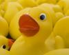 Duck Deluge