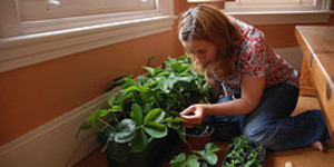 The Urban Gardening Interview: Nic From Myfolia.com