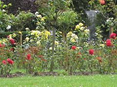 1309.flower.jpg
