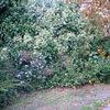 2209.bush-thumb.jpg