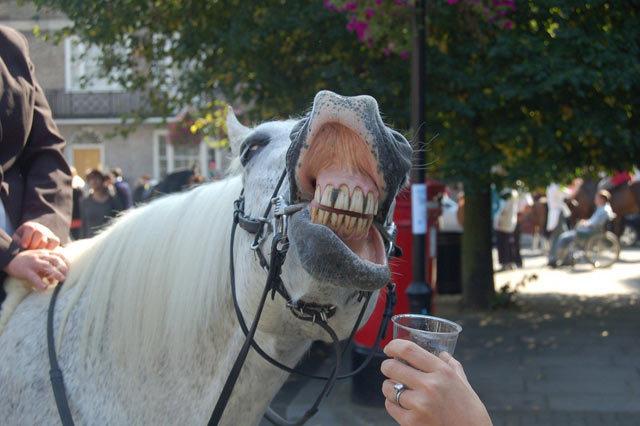 horseface.jpg