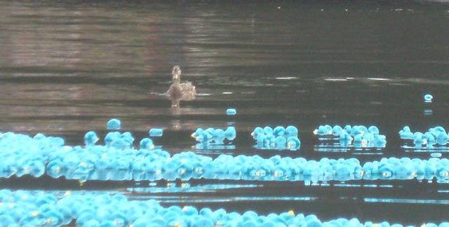 10003_duck8.jpg