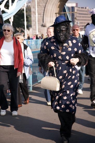 10311_gorilla_13.jpg
