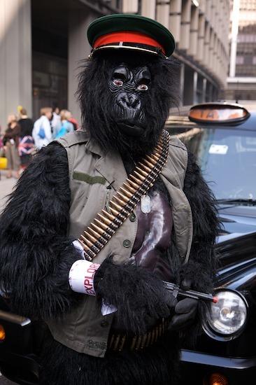 10311_gorilla_6.jpg