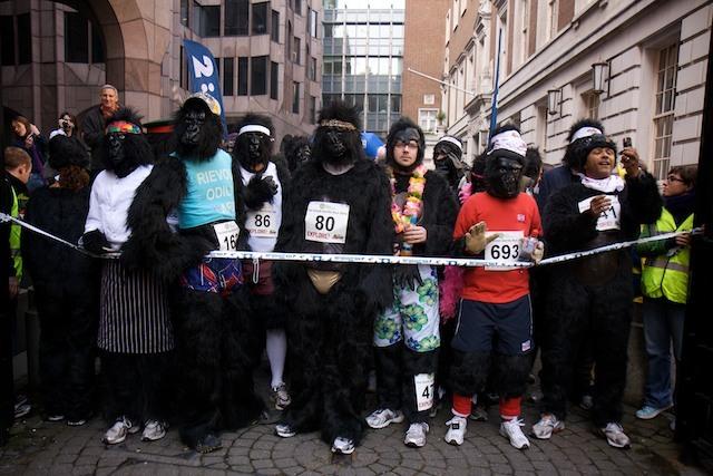 10311_gorilla_8.jpg