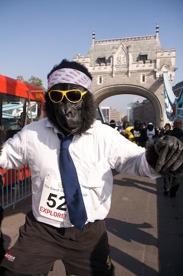 10311_gorilla_9.jpg