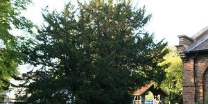 Nature-ist: The Totteridge Yew