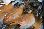 0210.fish.jpg