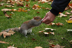 0810.squirrel.jpg