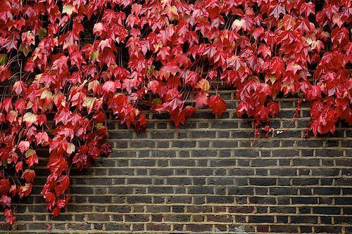autumn2008.jpg