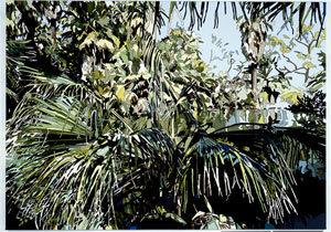 OasisofMora022007165x225cm.jpg