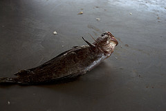1311.fish.jpg
