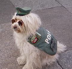 0901.dog.jpg