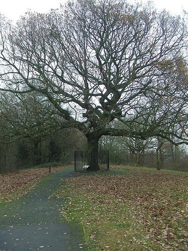 11435_peck-1-oak.jpg