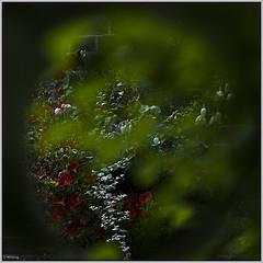 0602.garden.jpg